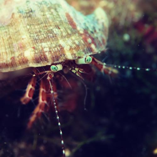 Crustacé2