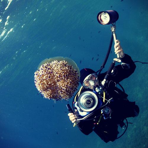 Plongeur-meduse-presqu-ile-giens