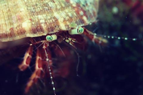 Explorez les fonds marins de la Presqu'île de Giens
